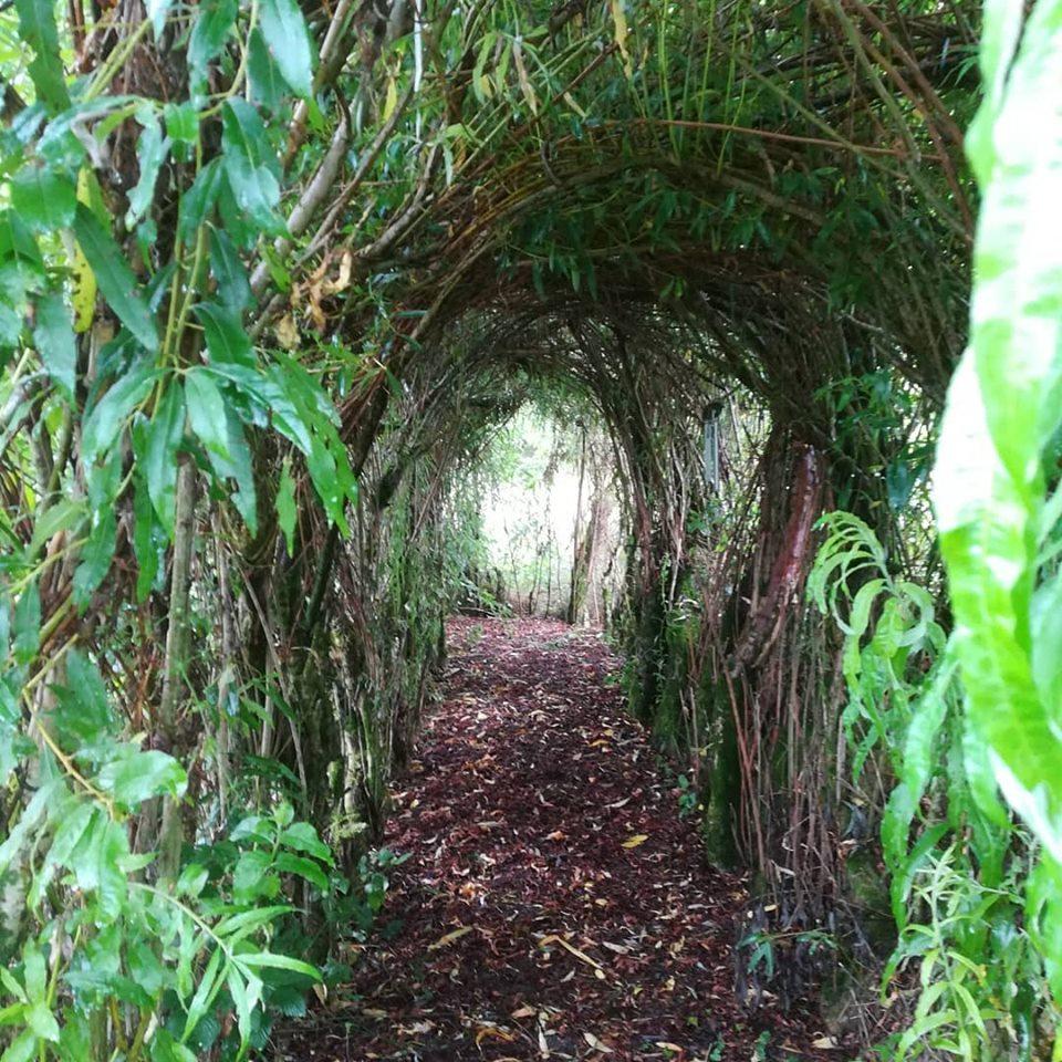 Walking Willow